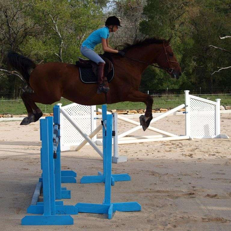 Libera Equus Showjumpers