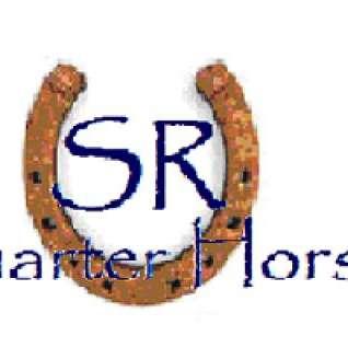 SR Quarter Horses