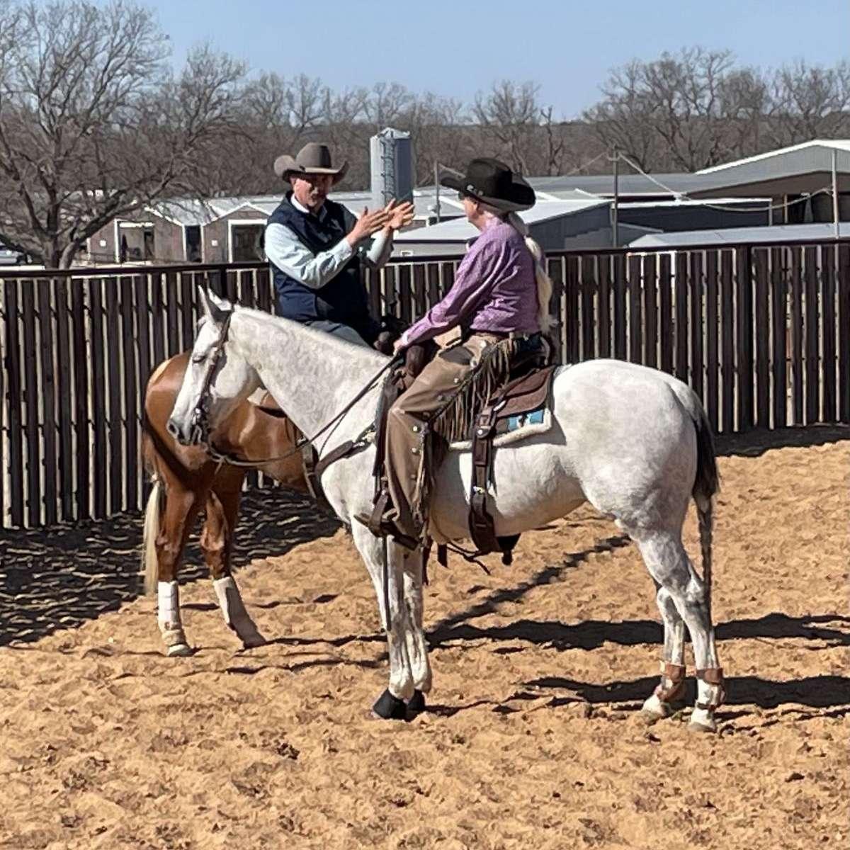 JK Versatility Performance Horses