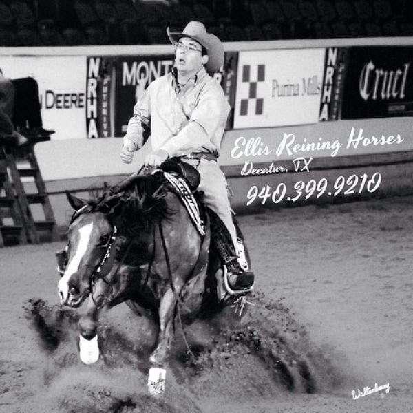 Ellis Reining Horses