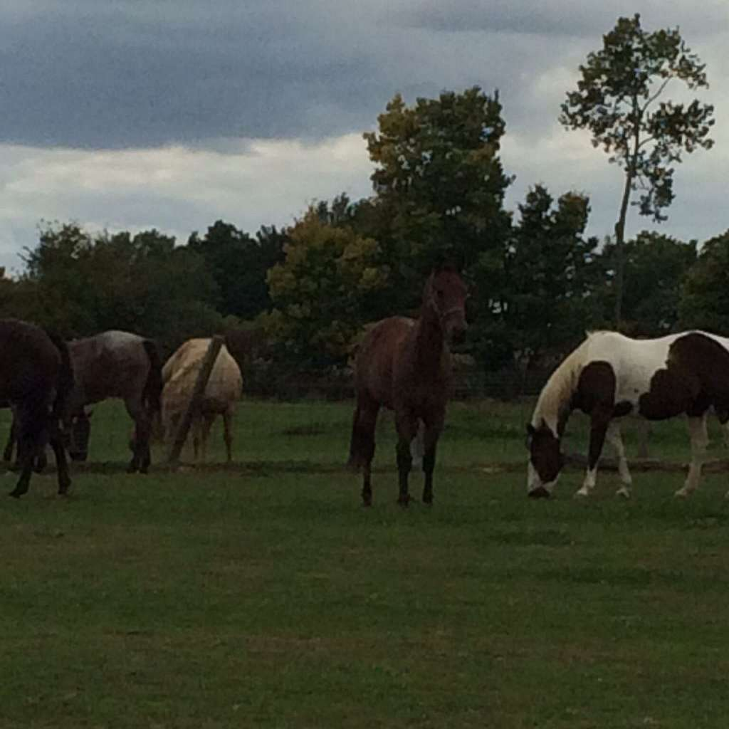 Furnish Quarter Horse Farm