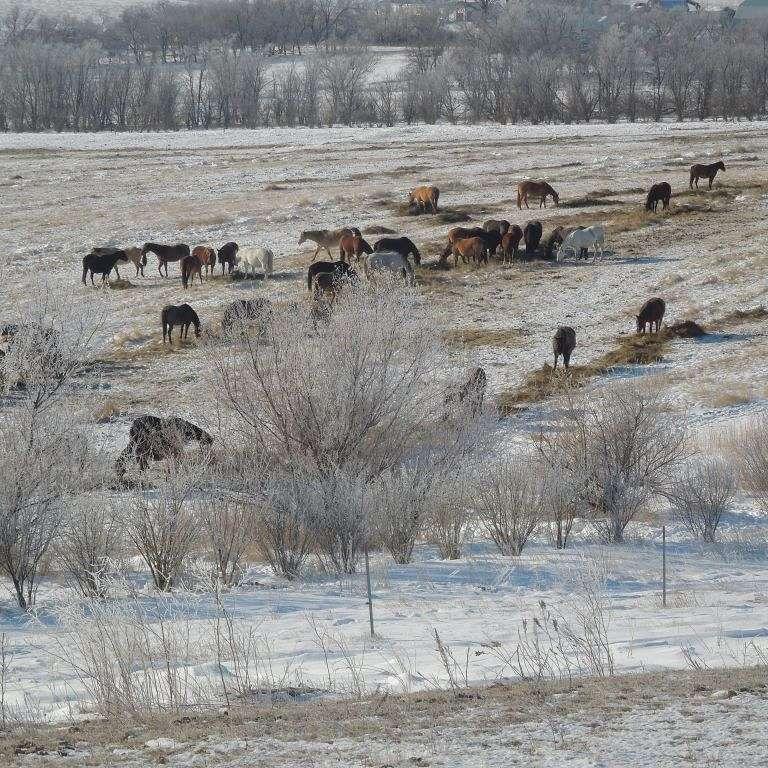Goetz Ranch