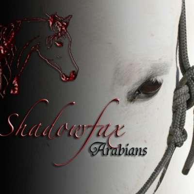 Shadowfax Arabians