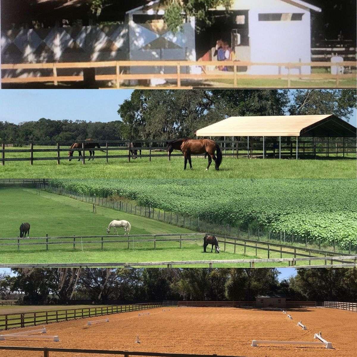 Under The Oaks Equestrian Center