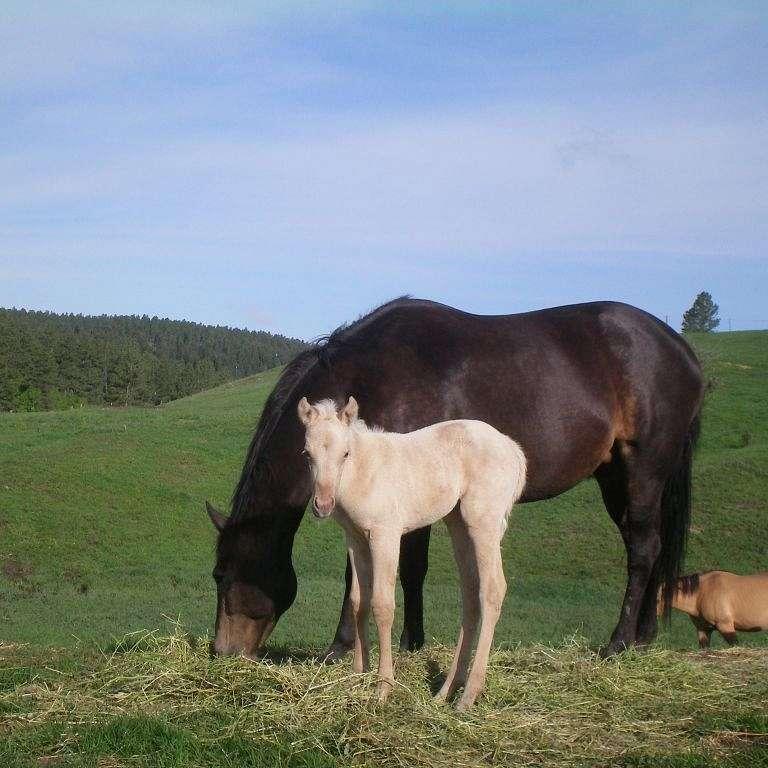 Mill Creek Quarter Horses and Training