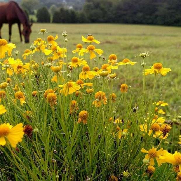 The Prancing Pony Horse Farm LLC