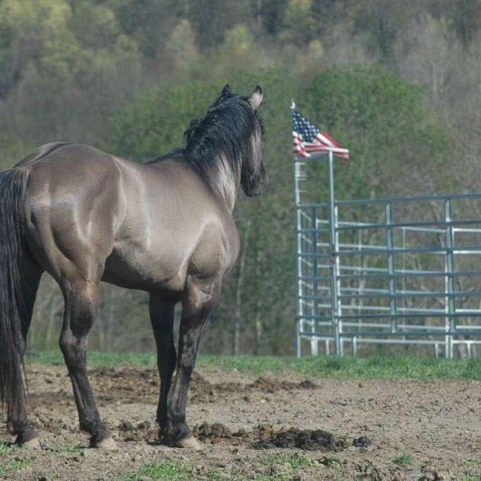 Stephen Quarter Horses