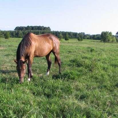 Gulf Coast Equine, LLC