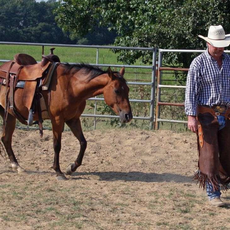 3L Horse Ranch