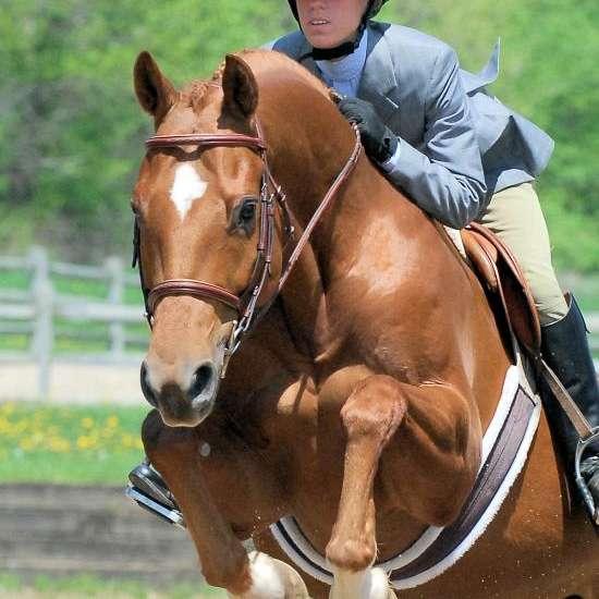 Synergy Equestrian