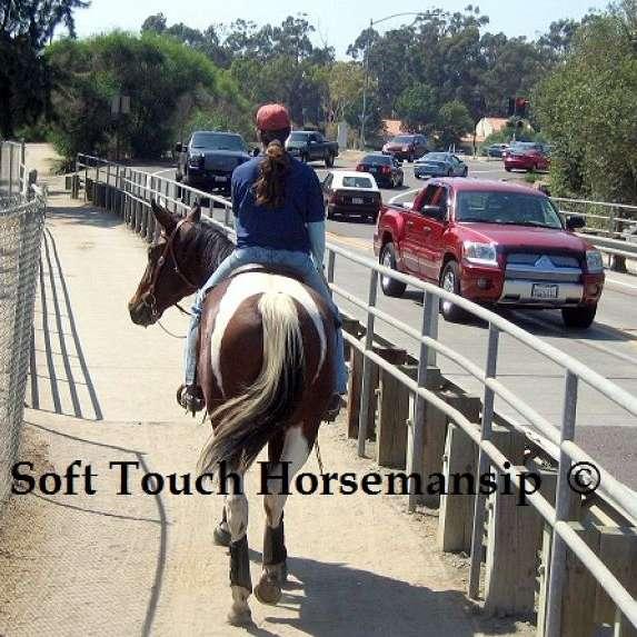 All American Horses