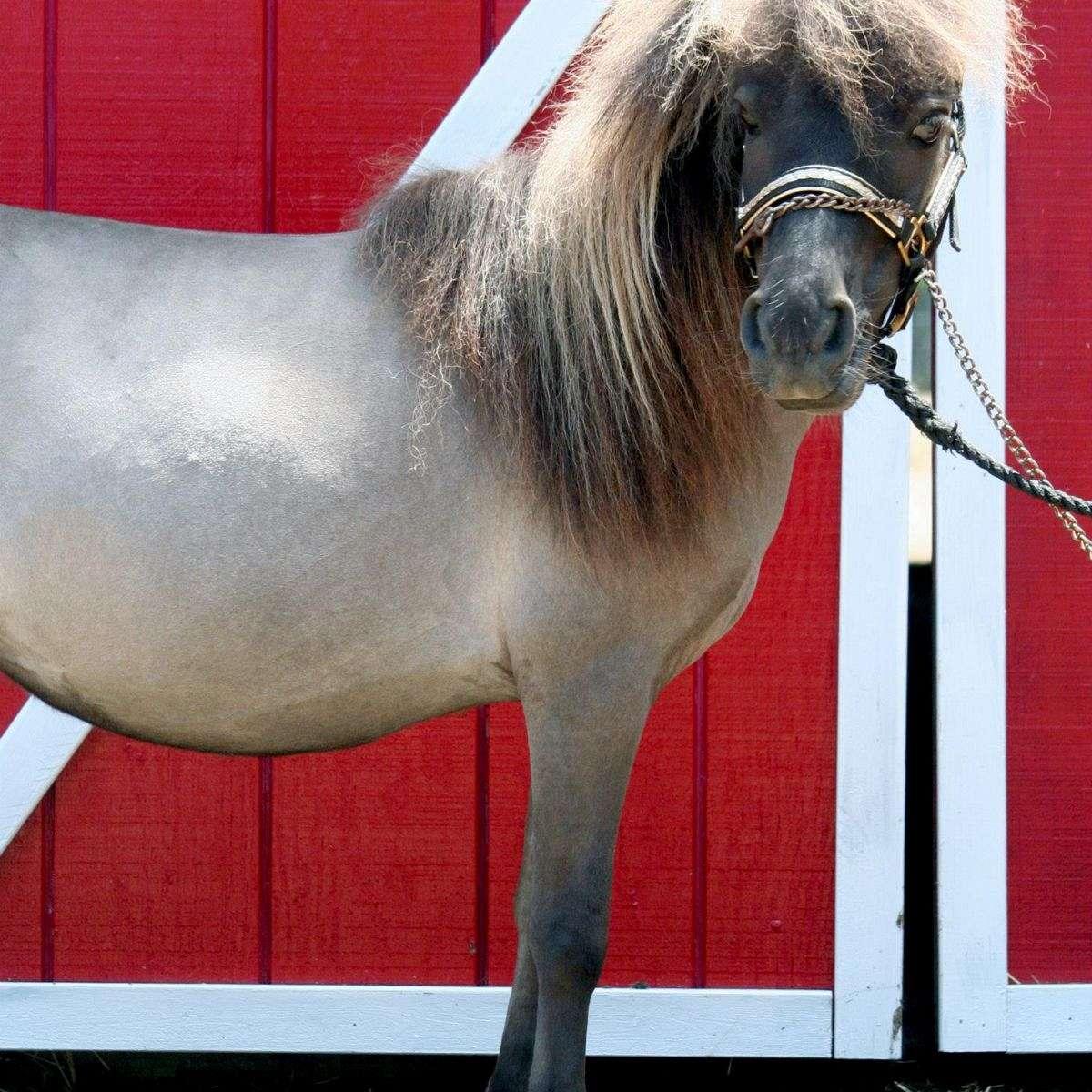 PSIM Horses