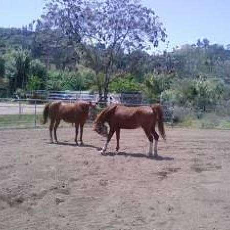 Little T Ranch