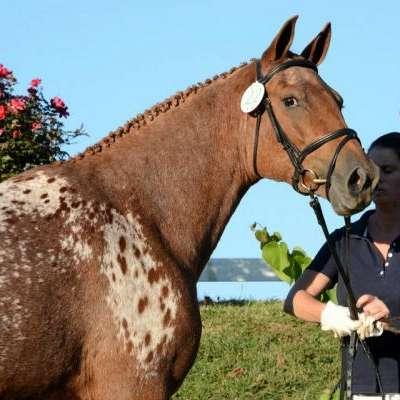 McKnight Equestrian Services