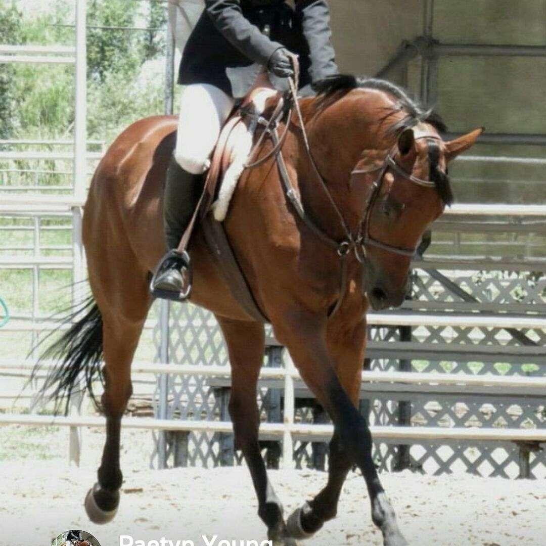 4 Crooks Equestrian
