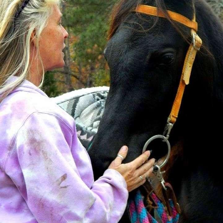 Malaj Acres Arabians
