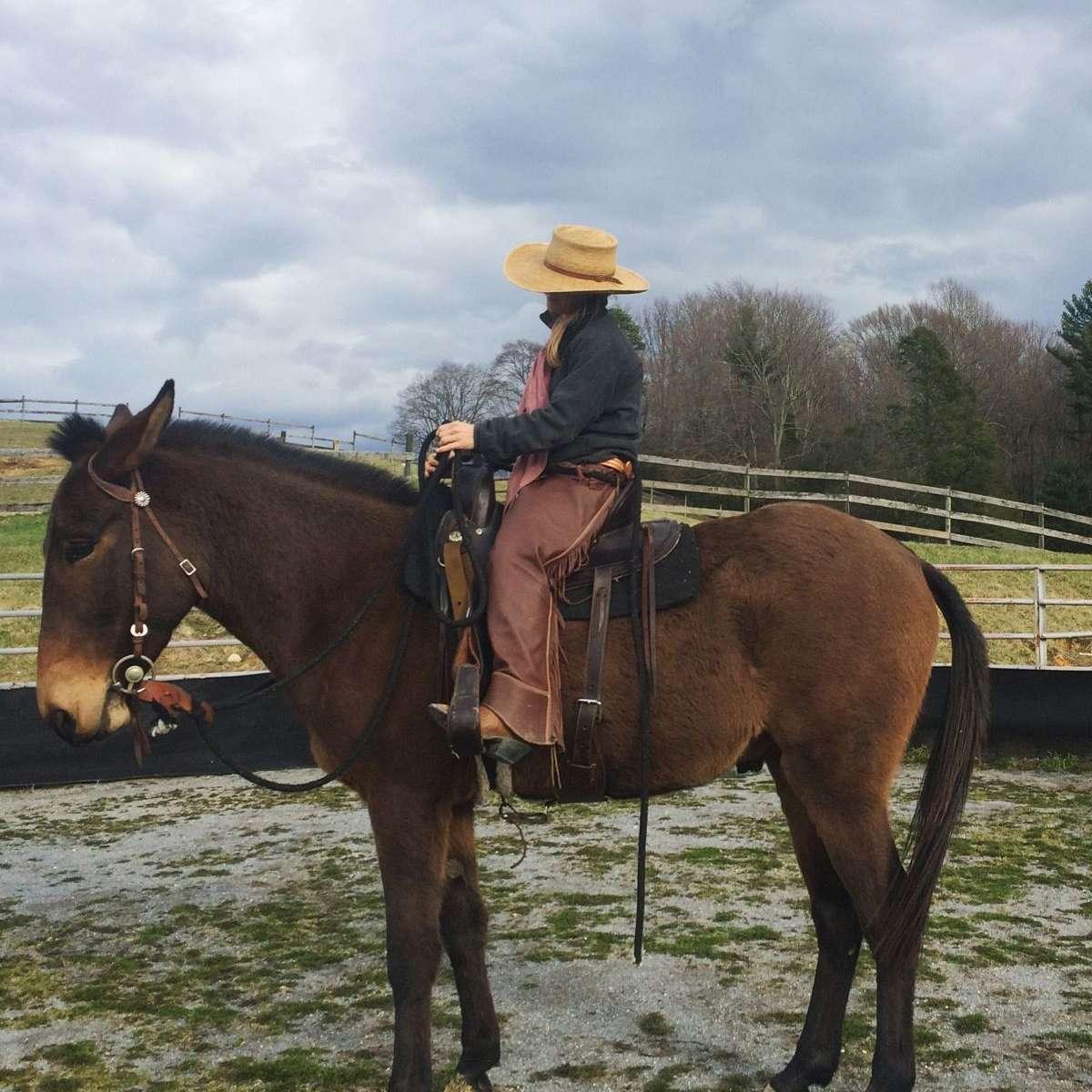 Audrey Bevins Equine Education