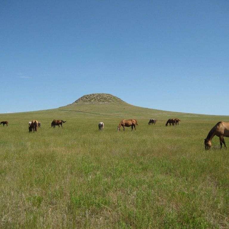 Schaffer Ranch