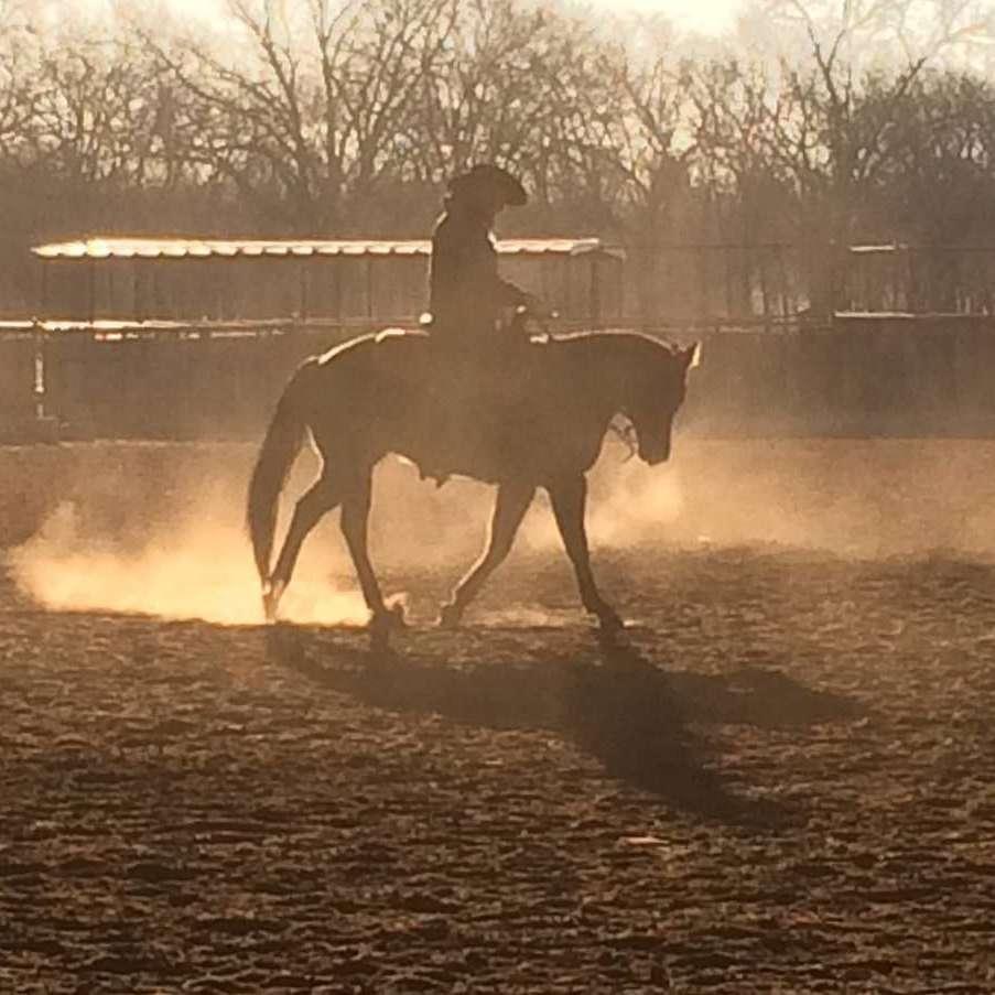 DC Equine Endeavors