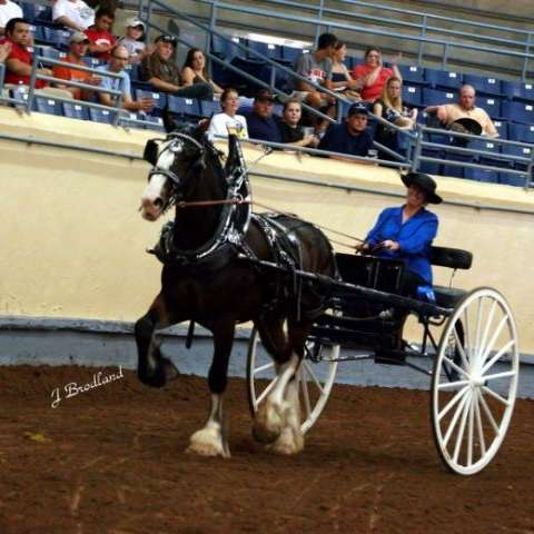 Big Sky Shires  Equine Services- Riding and Drivin