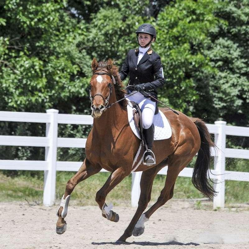 MH Equestrian