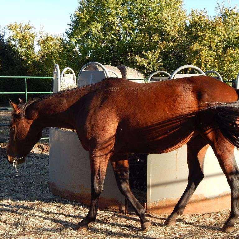Bruces Quarter Horses