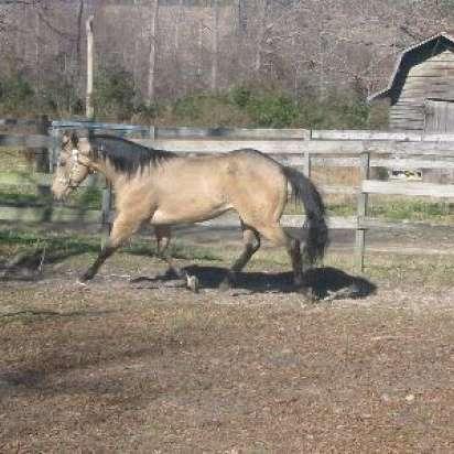 Maness Quarter Horses