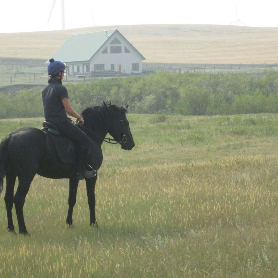 Windy Coulee Canadian Horses