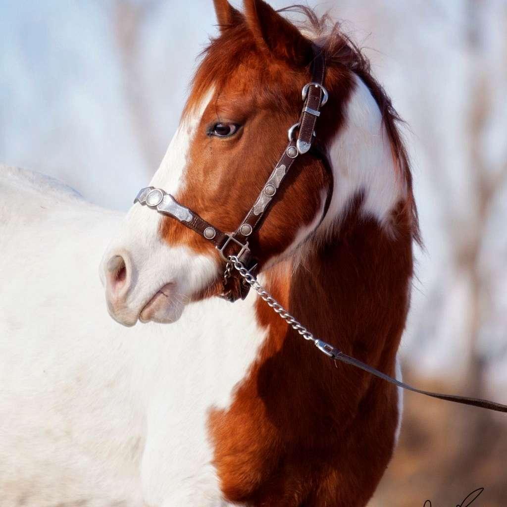 Smallwood Horses