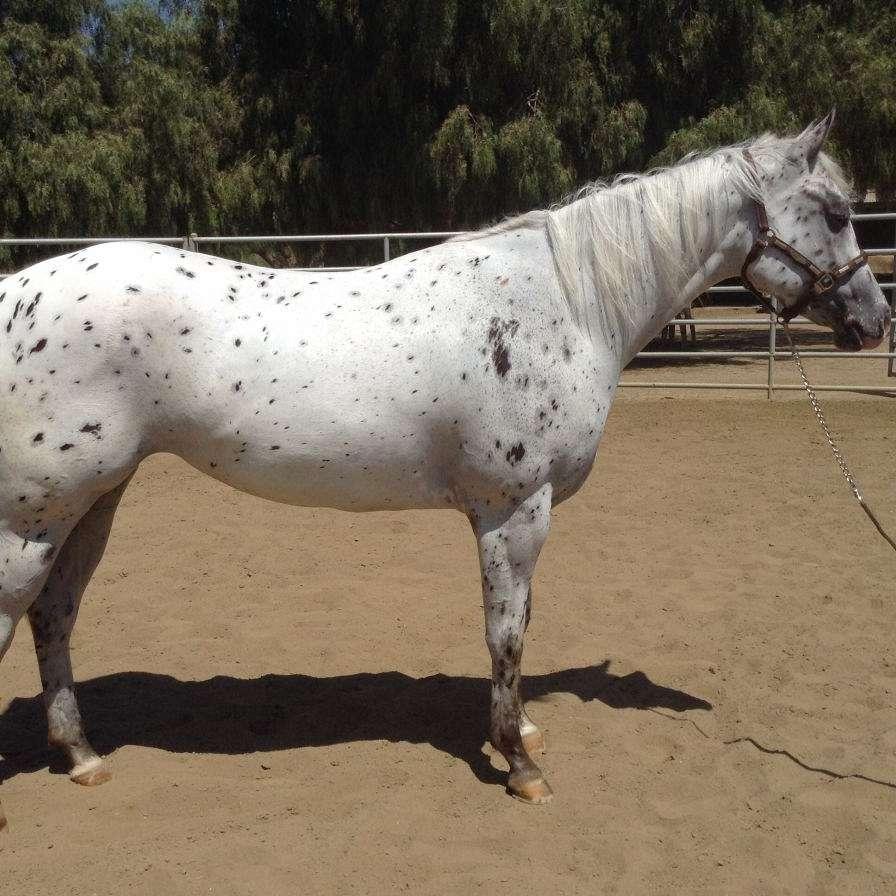 Sliders Performance Horses