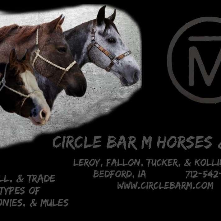 Circle Bar M Horses More