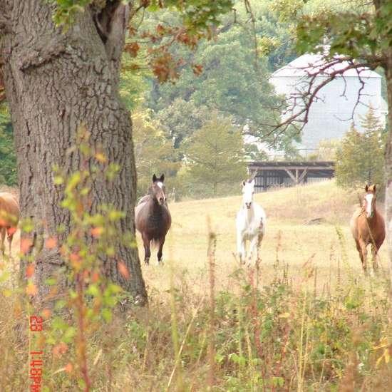 Nash-Ville Arabians