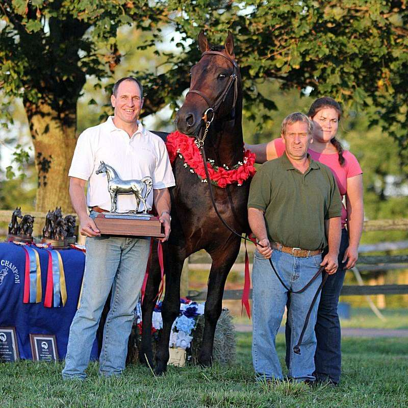 Randy Stoneback Arabians