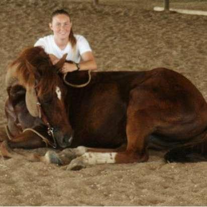 CW Baroque Horse