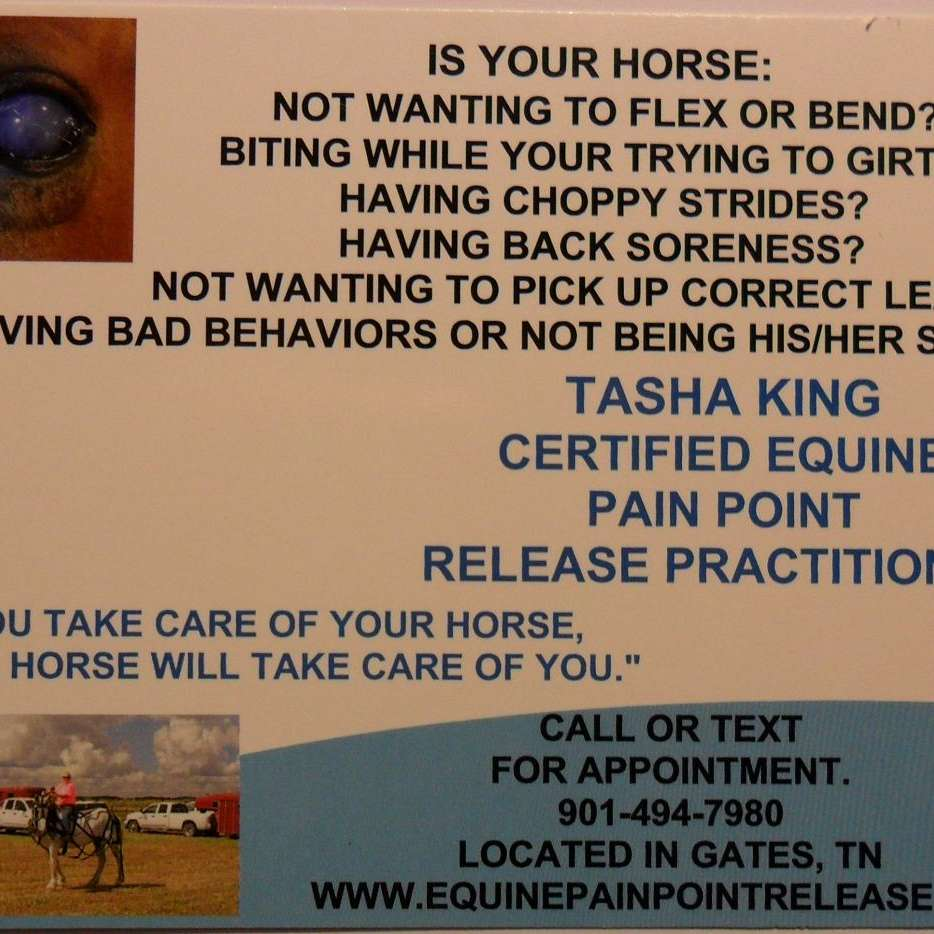 KING EQUINE PAIN POINT PRACTITIONER