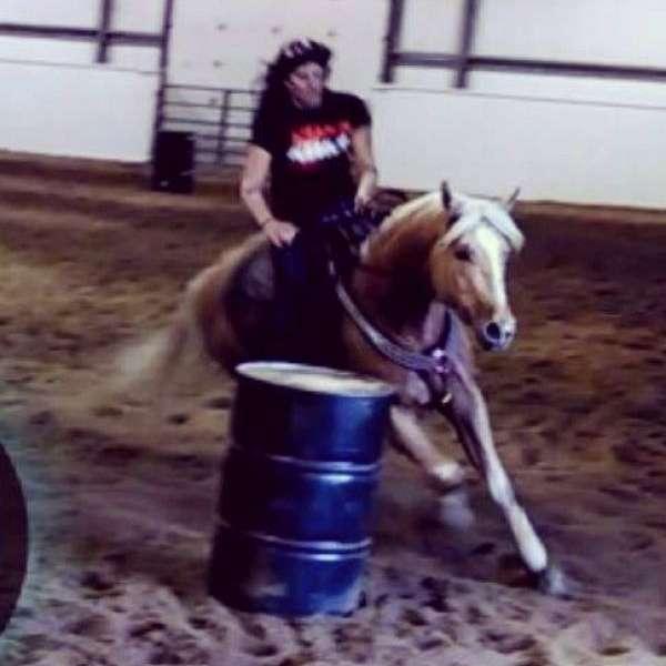 TB horse training