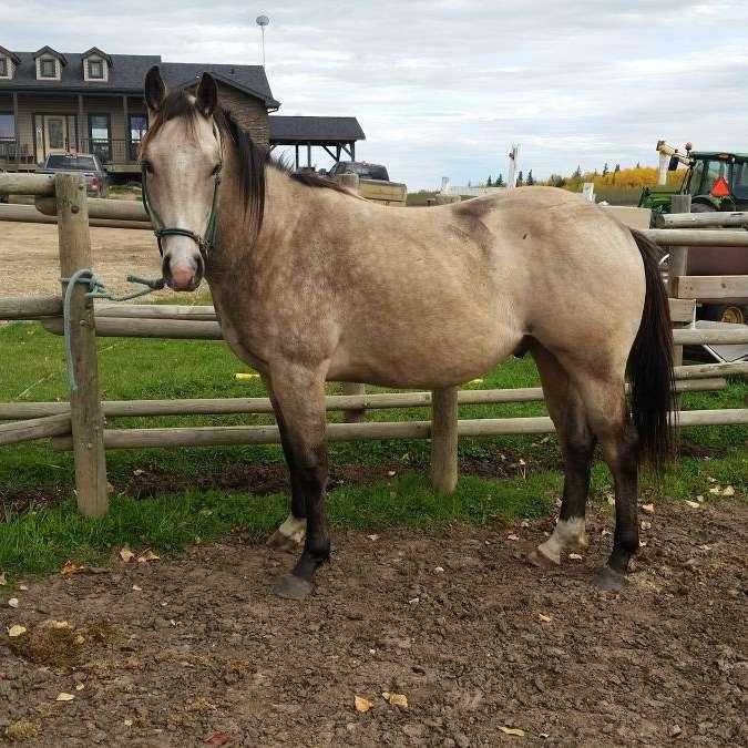 Quest Quarter Horses