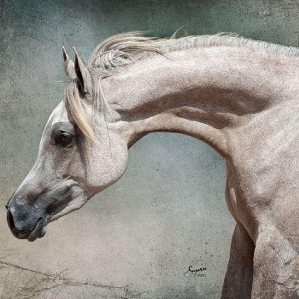 Marah Jamil Arabians