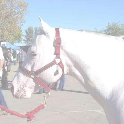 Golden Oaks Pony Ranch