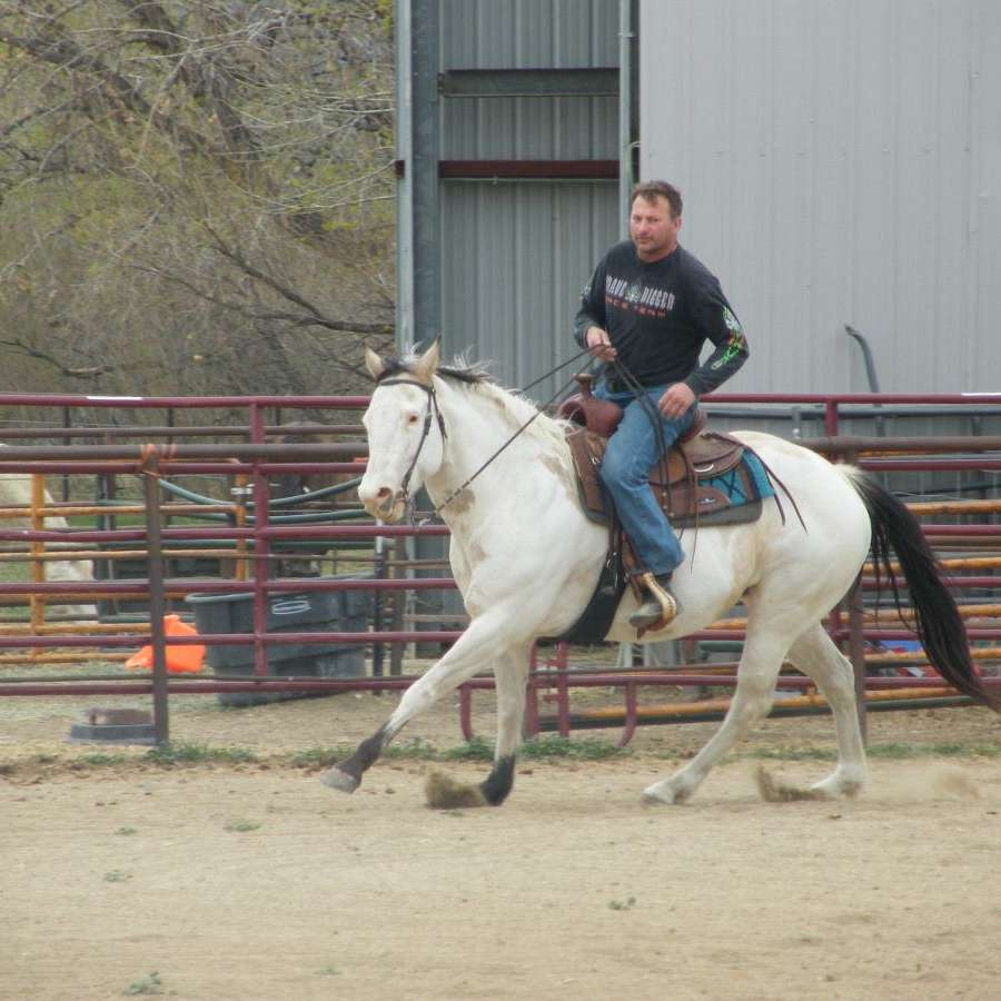 Spark Arabians LLC