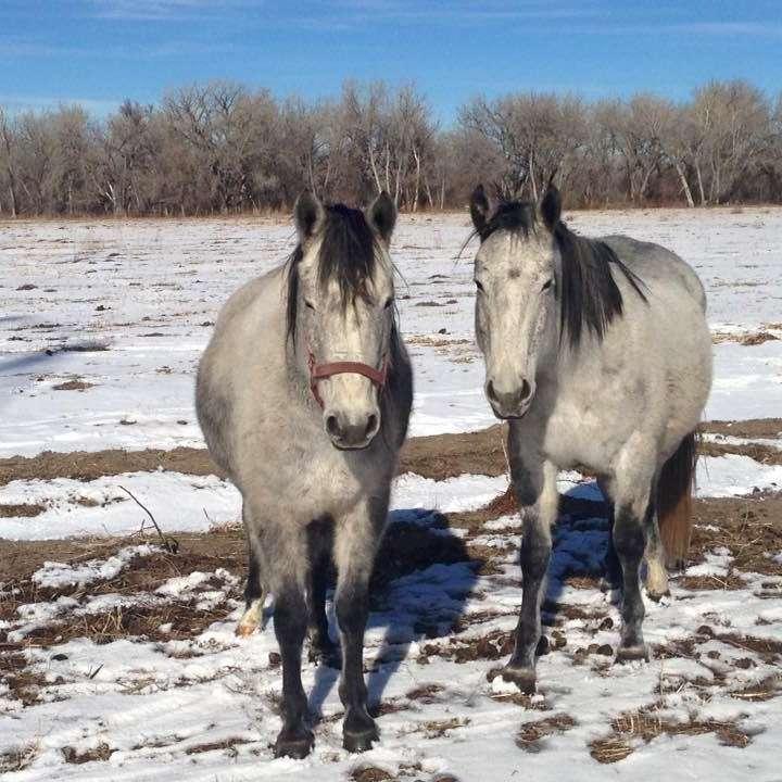 Safe Landing Horse Rescue