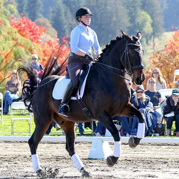 Kimberly Mitchell Dressage
