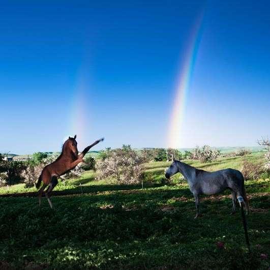 Prairie Thunder Ranch