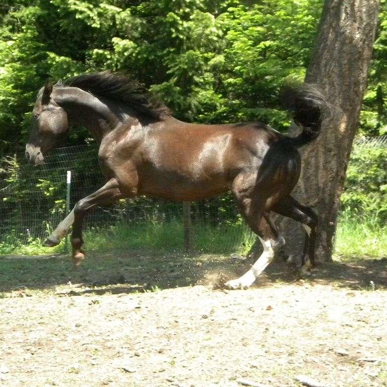 Cassidy's miniature horses