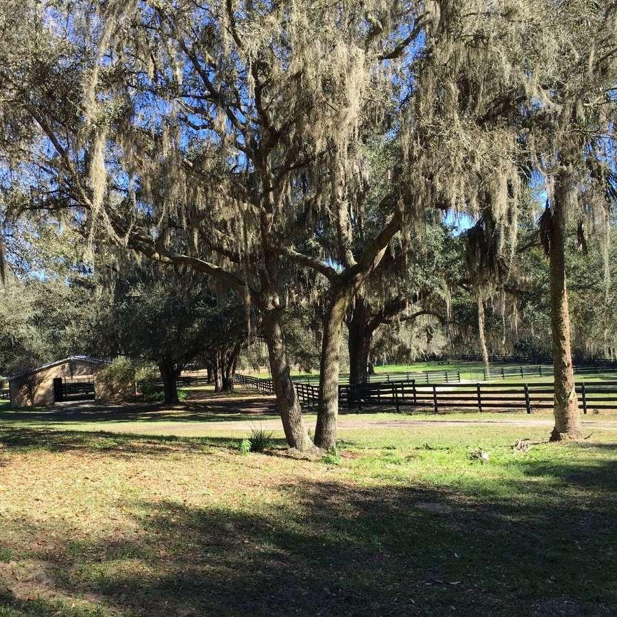 Mossy Oaks Farm