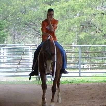 NE Horse Training