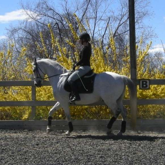 French classical dressage for every horse