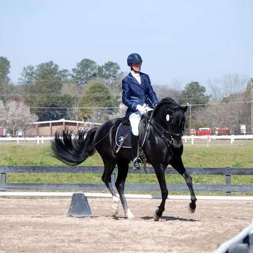 Classical Dressage Training