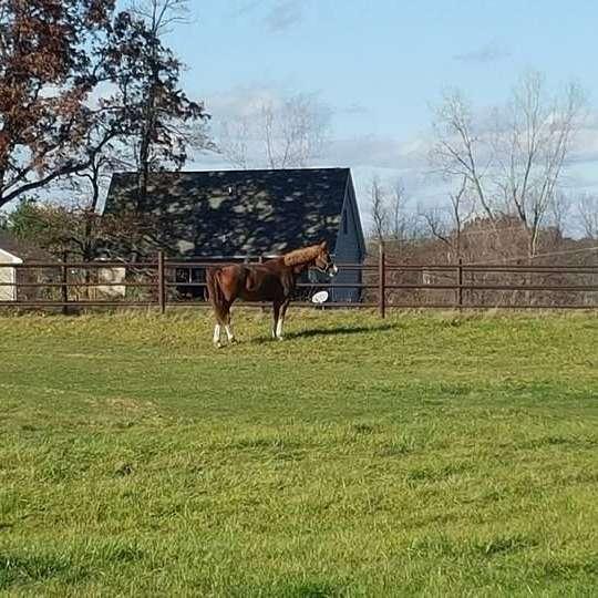 Groveland Equestrian Center
