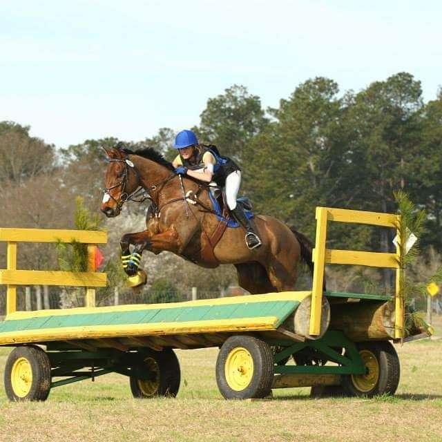 Hailey Rich Horse Trainer